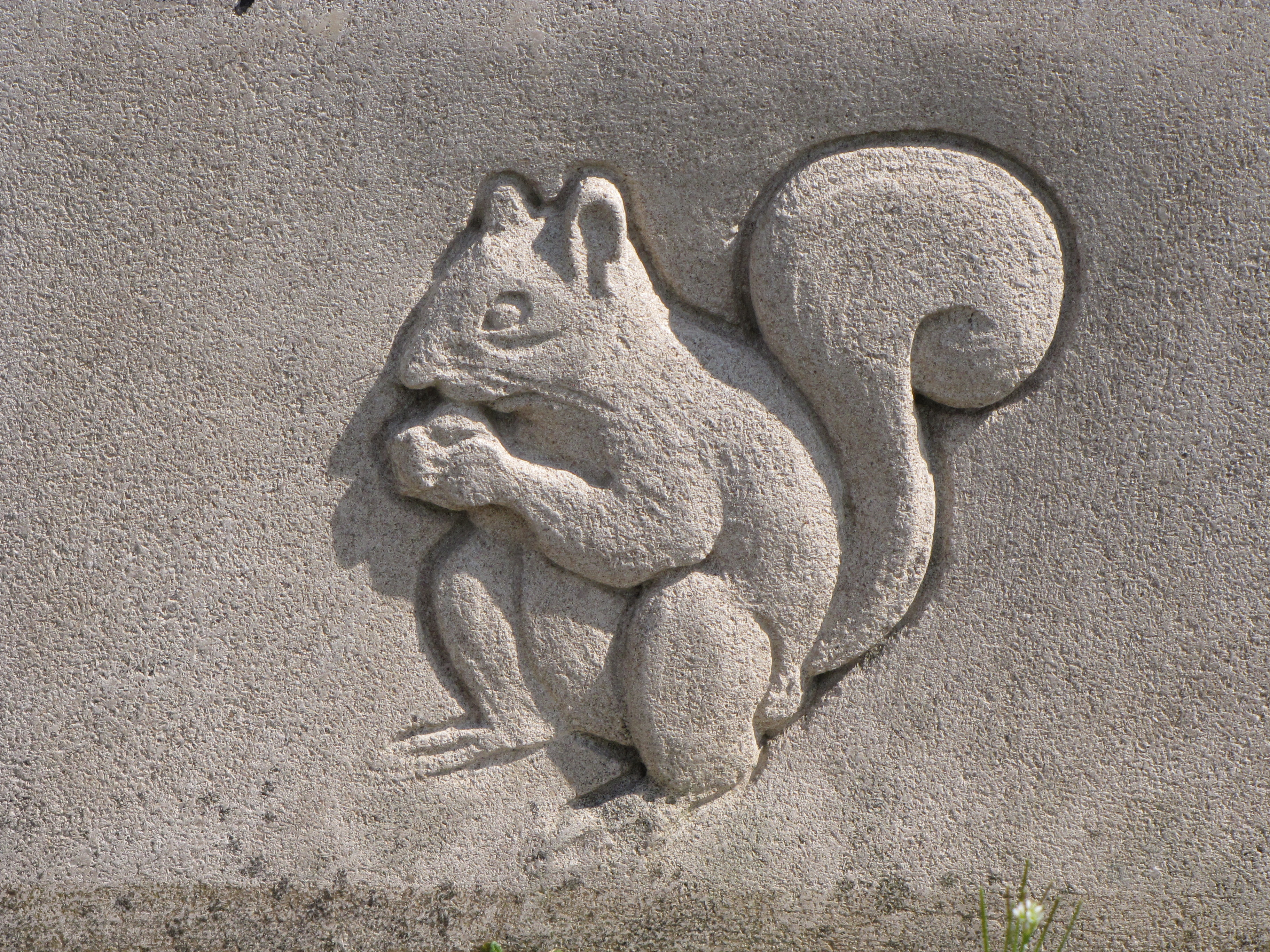 Related keywords suggestions for squirrel carving